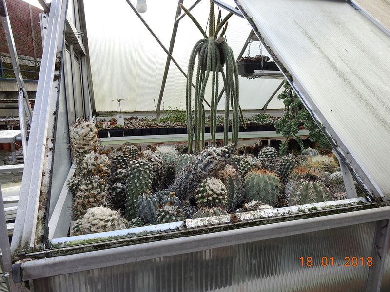 Cacti and Sukkulent in Köln, every day new flowers in the greenhouse Part 184 Bild1157