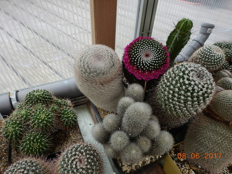 Cacti and Sukkulent in Köln, every day new flowers in the greenhouse Part 184 Bild1174
