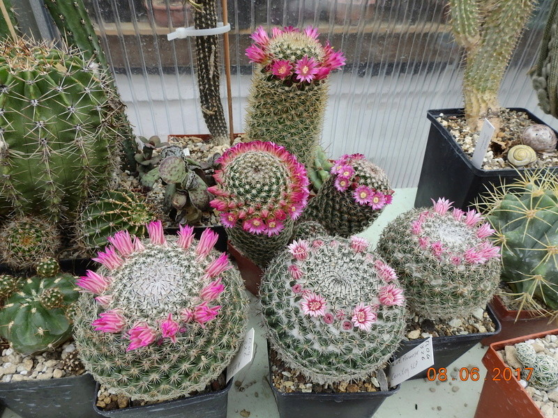 Cacti and Sukkulent in Köln, every day new flowers in the greenhouse Part 184 Bild1176