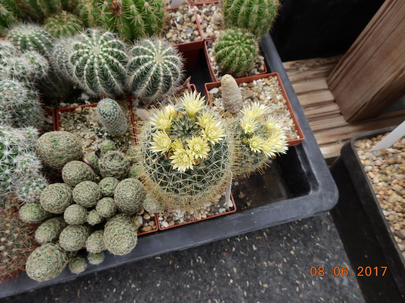 Cacti and Sukkulent in Köln, every day new flowers in the greenhouse Part 184 Bild1177