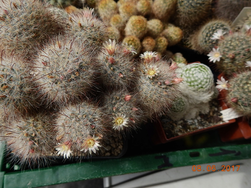 Cacti and Sukkulent in Köln, every day new flowers in the greenhouse Part 185 Bild1192