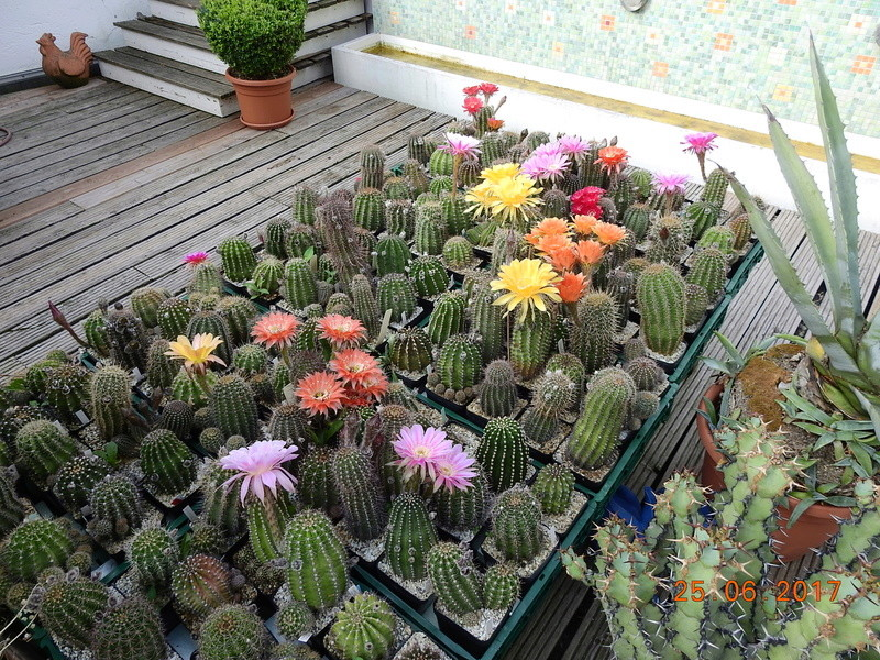 Cacti and Sukkulent in Köln, every day new flowers in the greenhouse Part 185 Bild1225