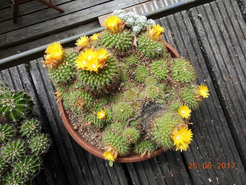 Cacti and Sukkulent in Köln, every day new flowers in the greenhouse Part 185 Bild1267