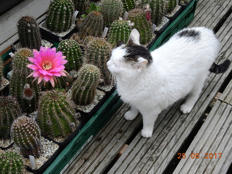 Cacti and Sukkulent in Köln, every day new flowers in the greenhouse Part 185 Bild1274