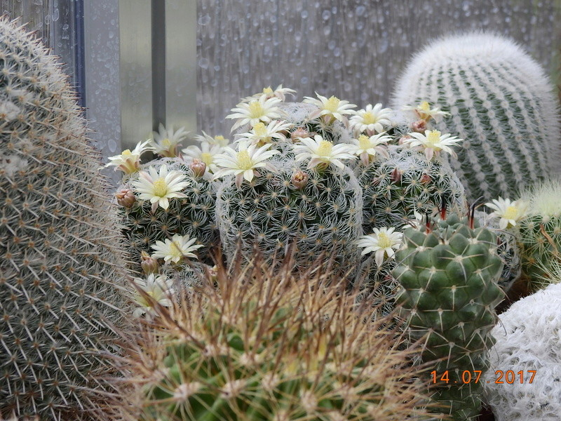 Cacti and Sukkulent in Köln, every day new flowers in the greenhouse Part 186 Bild1358