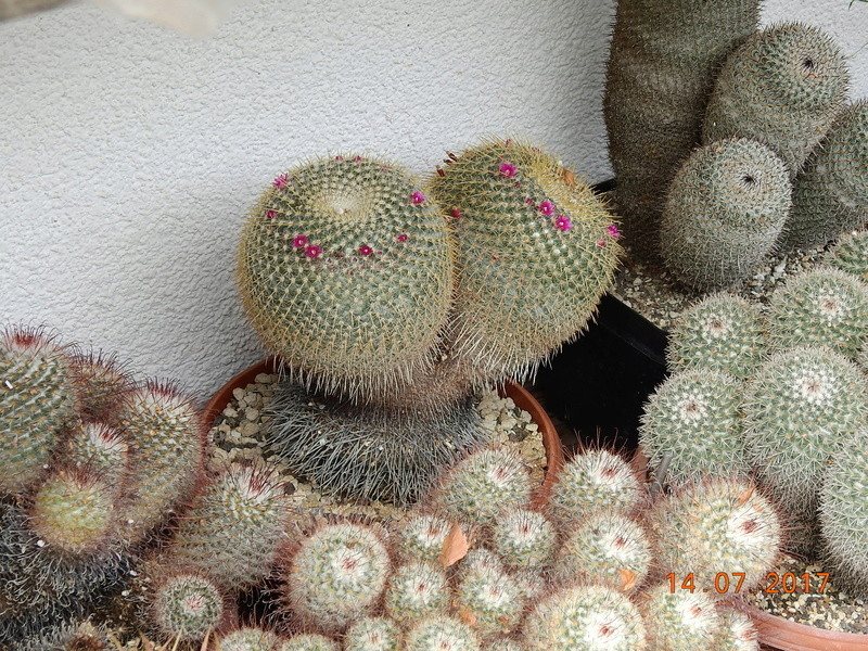 Cacti and Sukkulent in Köln, every day new flowers in the greenhouse Part 186 Bild1360