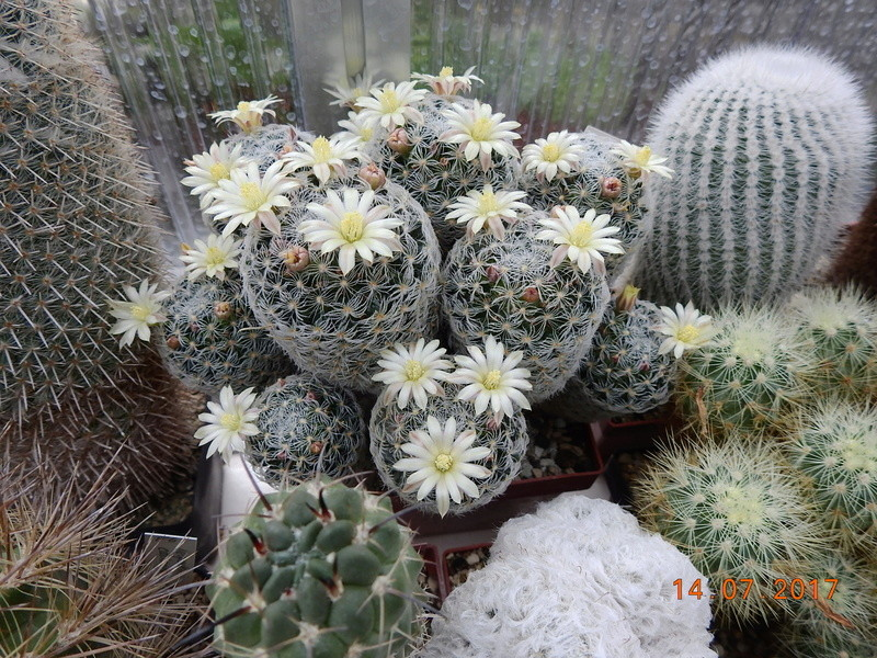 Cacti and Sukkulent in Köln, every day new flowers in the greenhouse Part 186 Bild1401