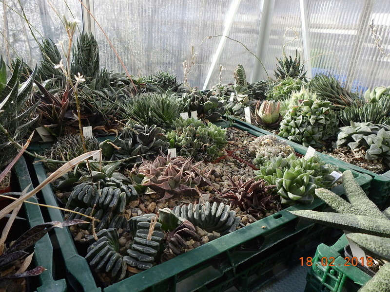 Cacti and Sukkulent in Köln, every day new flowers in the greenhouse Part 187 Bild1509