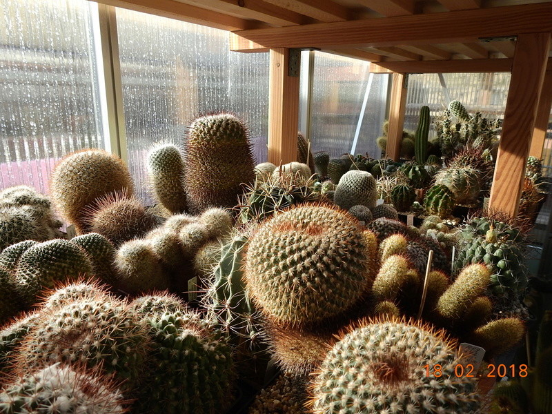 Cacti and Sukkulent in Köln, every day new flowers in the greenhouse Part 187 Bild1512