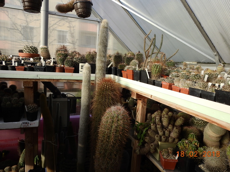 Cacti and Sukkulent in Köln, every day new flowers in the greenhouse Part 187 Bild1517