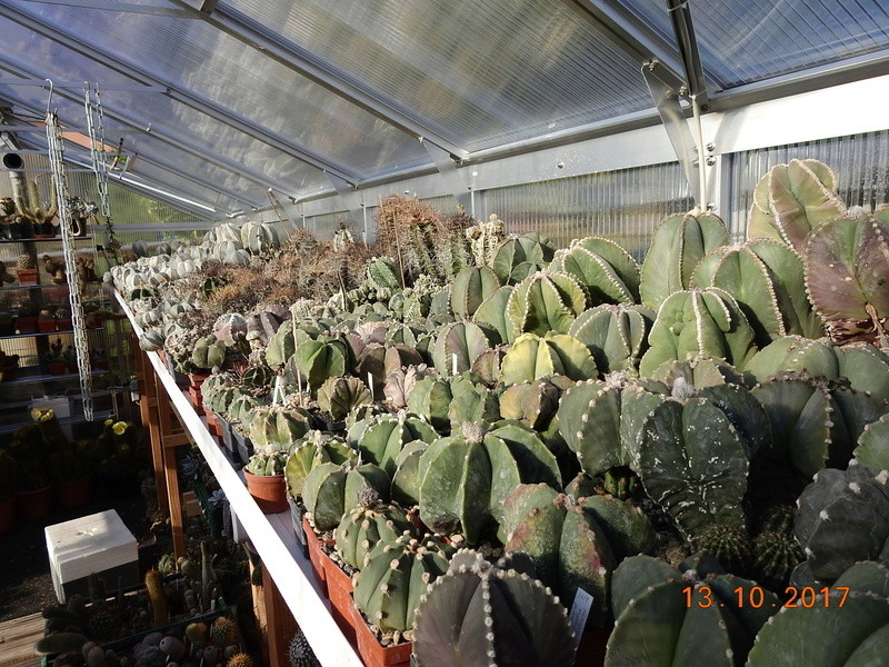 Cacti and Sukkulent in Köln, every day new flowers in the greenhouse Part 187 Bild1531