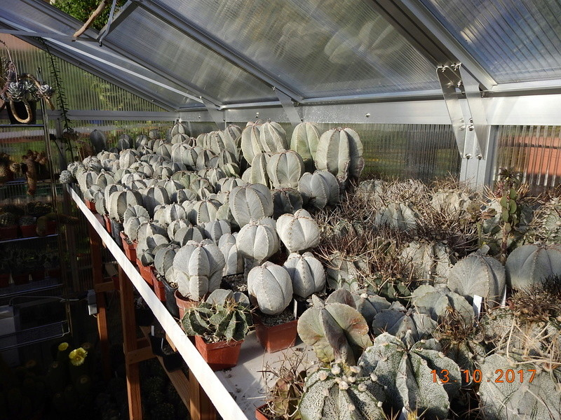 Cacti and Sukkulent in Köln, every day new flowers in the greenhouse Part 187 Bild1535