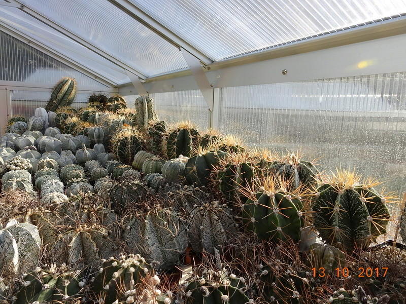 Cacti and Sukkulent in Köln, every day new flowers in the greenhouse Part 187 Bild1536