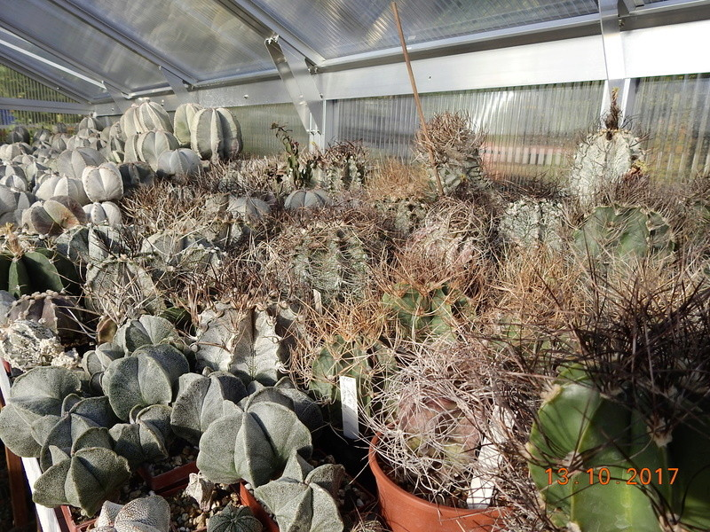 Cacti and Sukkulent in Köln, every day new flowers in the greenhouse Part 187 Bild1538