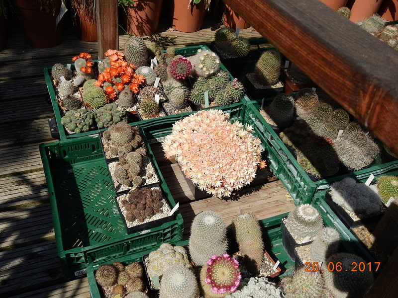Cacti and Sukkulent in Köln, every day new flowers in the greenhouse Part 188 Bild1647