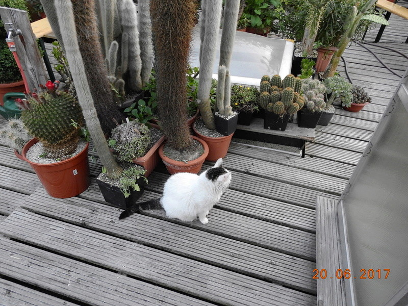 Cacti and Sukkulent in Köln, every day new flowers in the greenhouse Part 188 Bild1723