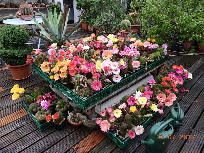 Cacti and Sukkulent in Köln, every day new flowers in the greenhouse Part 189 Bild1730