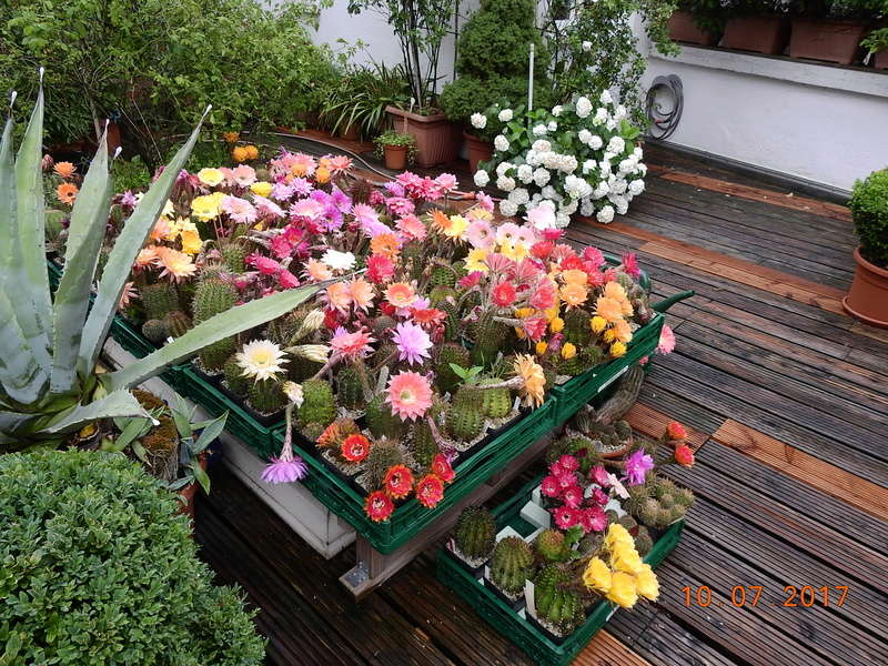 Cacti and Sukkulent in Köln, every day new flowers in the greenhouse Part 189 Bild1734