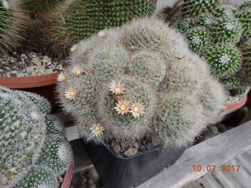 Cacti and Sukkulent in Köln, every day new flowers in the greenhouse Part 189 Bild1747