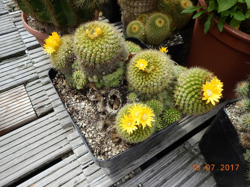 Cacti and Sukkulent in Köln, every day new flowers in the greenhouse Part 189 Bild1757