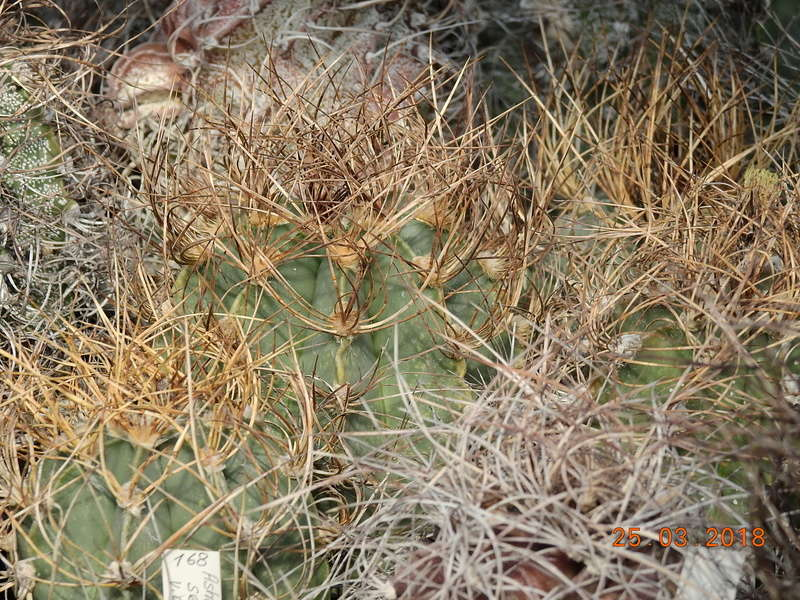 Cacti and Sukkulent in Köln, every day new flowers in the greenhouse Part 189 Bild1779