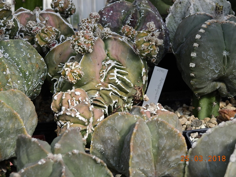 Cacti and Sukkulent in Köln, every day new flowers in the greenhouse Part 189 Bild1781