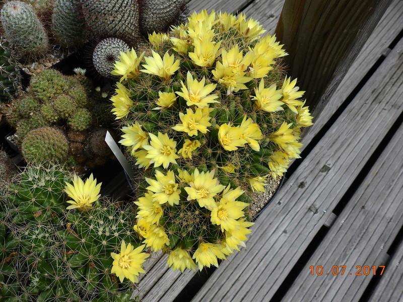 Cacti and Sukkulent in Köln, every day new flowers in the greenhouse Part 189 Bild1795