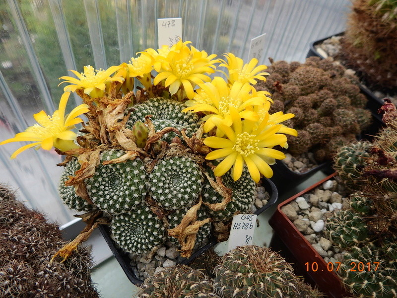 Cacti and Sukkulent in Köln, every day new flowers in the greenhouse Part 189 Bild1829