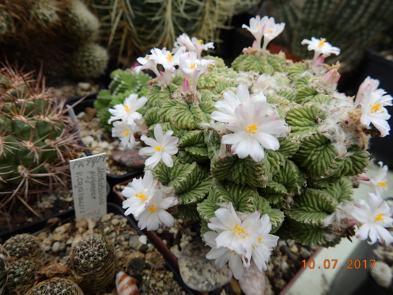 Cacti and Sukkulent in Köln, every day new flowers in the greenhouse Part 189 Bild1830