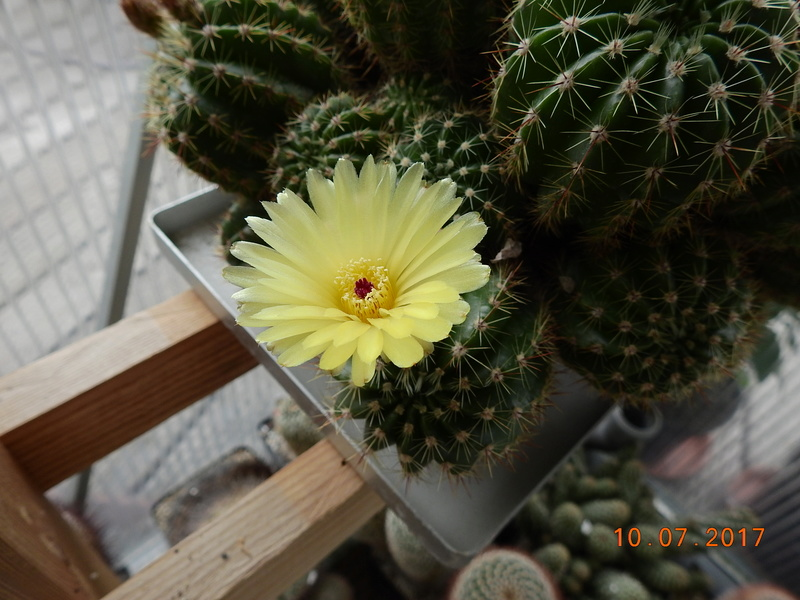 Cacti and Sukkulent in Köln, every day new flowers in the greenhouse Part 189 Bild1838