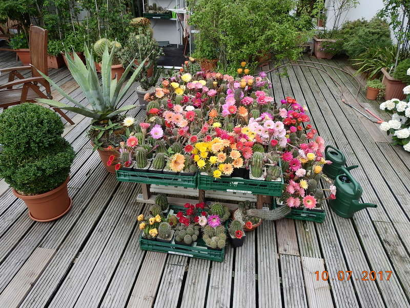 Cacti and Sukkulent in Köln, every day new flowers in the greenhouse Part 189 Bild1843
