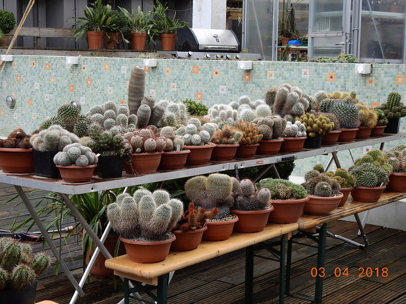 Cacti and Sukkulent in Köln, every day new flowers in the greenhouse Part 189 Bild1867
