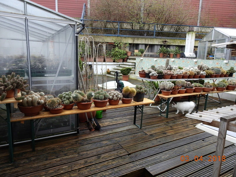 Cacti and Sukkulent in Köln, every day new flowers in the greenhouse Part 189 Bild1868