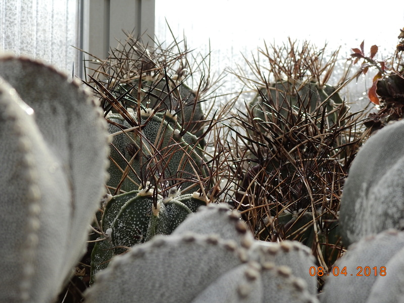 Cacti and Sukkulent in Köln, every day new flowers in the greenhouse Part 190 Bild1909