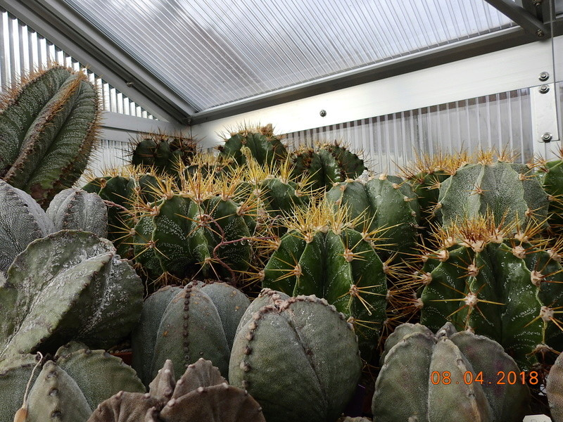 Cacti and Sukkulent in Köln, every day new flowers in the greenhouse Part 190 Bild1915