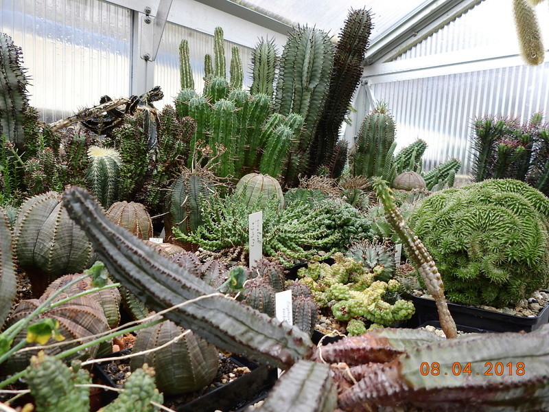 Cacti and Sukkulent in Köln, every day new flowers in the greenhouse Part 190 Bild1922