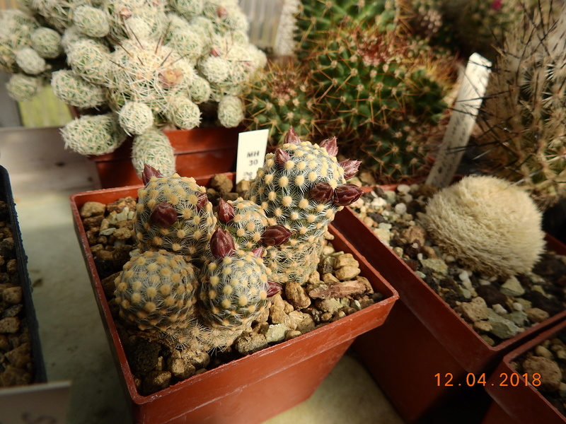 Cacti and Sukkulent in Köln, every day new flowers in the greenhouse Part 191 Bild1956