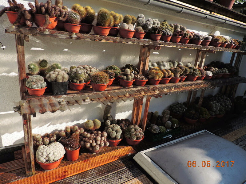 Cacti and Sukkulent in Köln, every day new flowers in the greenhouse Part 191 Bild1971