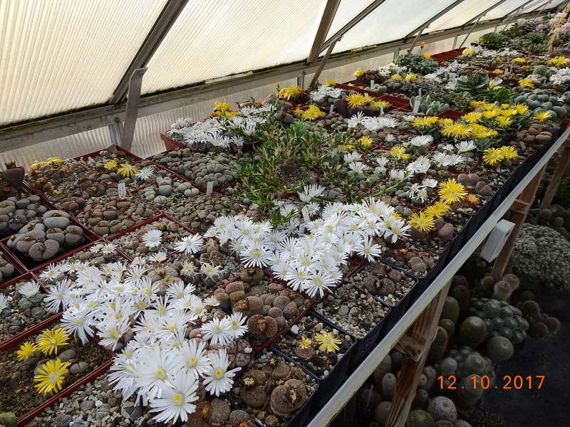 Cacti and Sukkulent in Köln, every day new flowers in the greenhouse Part 191 Bild1972