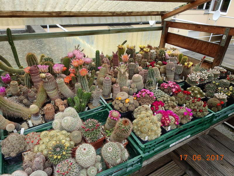 Cacti and Sukkulent in Köln, every day new flowers in the greenhouse Part 191 Bild1973
