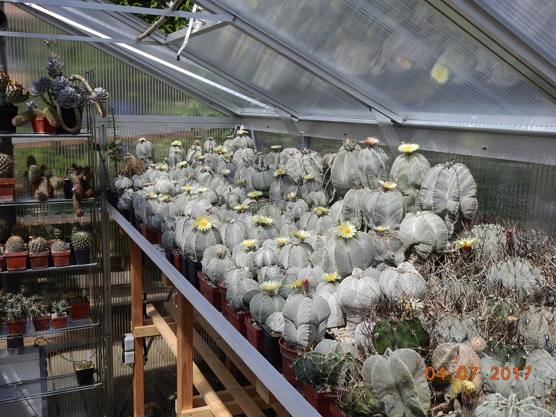 Cacti and Sukkulent in Köln, every day new flowers in the greenhouse Part 191 Bild1975