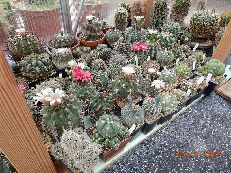 Cacti and Sukkulent in Köln, every day new flowers in the greenhouse Part 191 Bild1976