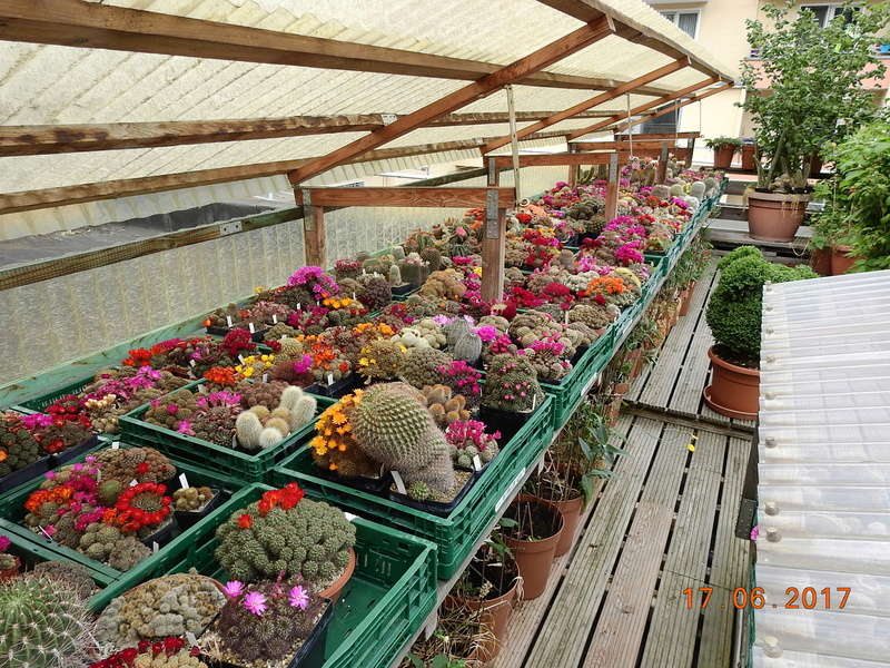 Cacti and Sukkulent in Köln, every day new flowers in the greenhouse Part 191 Bild1977