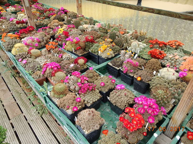 Cacti and Sukkulent in Köln, every day new flowers in the greenhouse Part 191 Bild1979