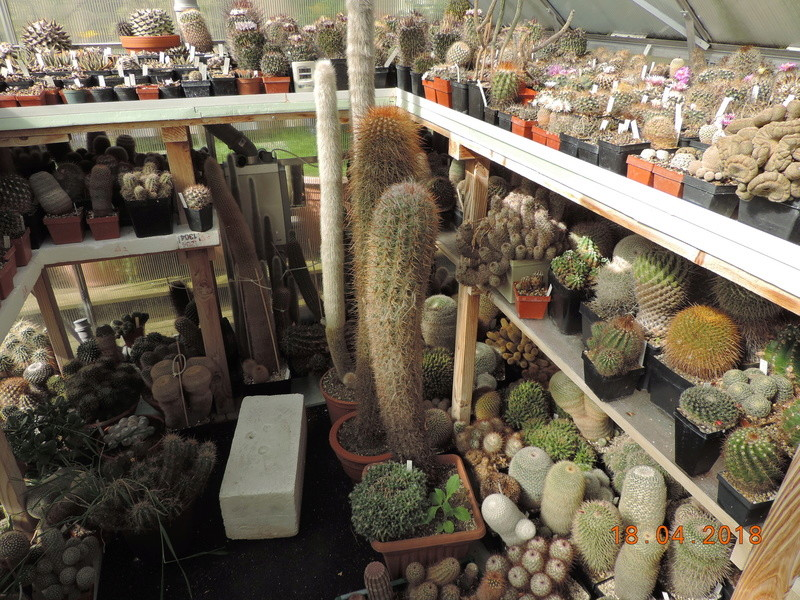 Cacti and Sukkulent in Köln, every day new flowers in the greenhouse Part 191 Bild2006