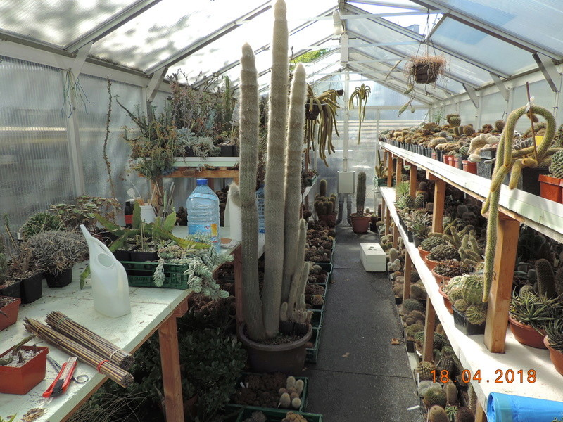 Cacti and Sukkulent in Köln, every day new flowers in the greenhouse Part 191 Bild2011