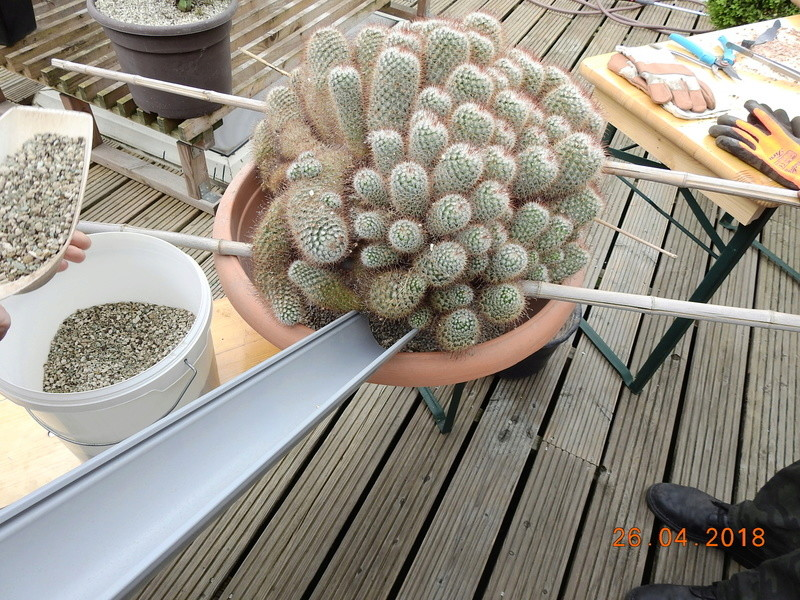 Cacti and Sukkulent in Köln, every day new flowers in the greenhouse Part 192 Bild2110