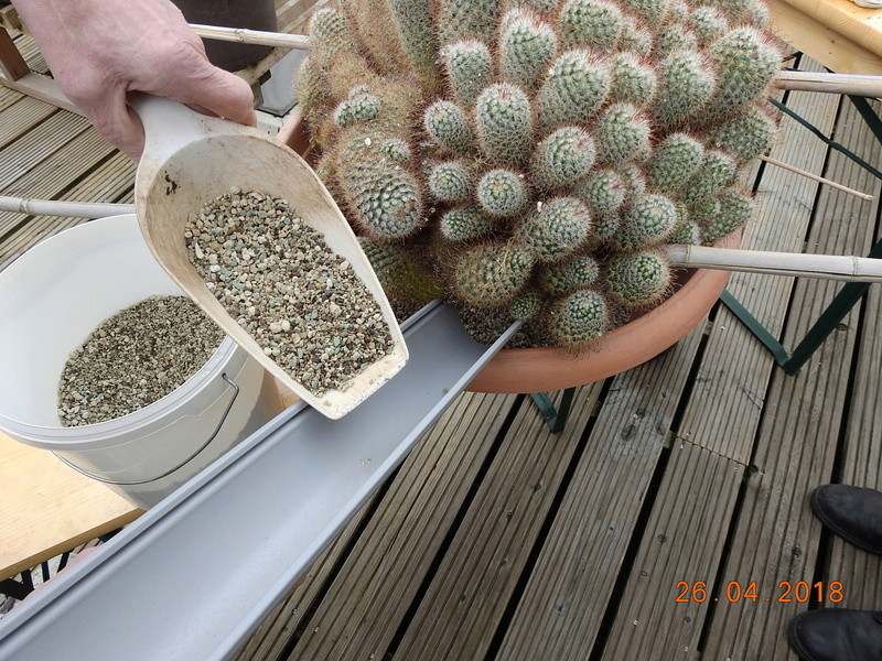 Cacti and Sukkulent in Köln, every day new flowers in the greenhouse Part 192 Bild2111
