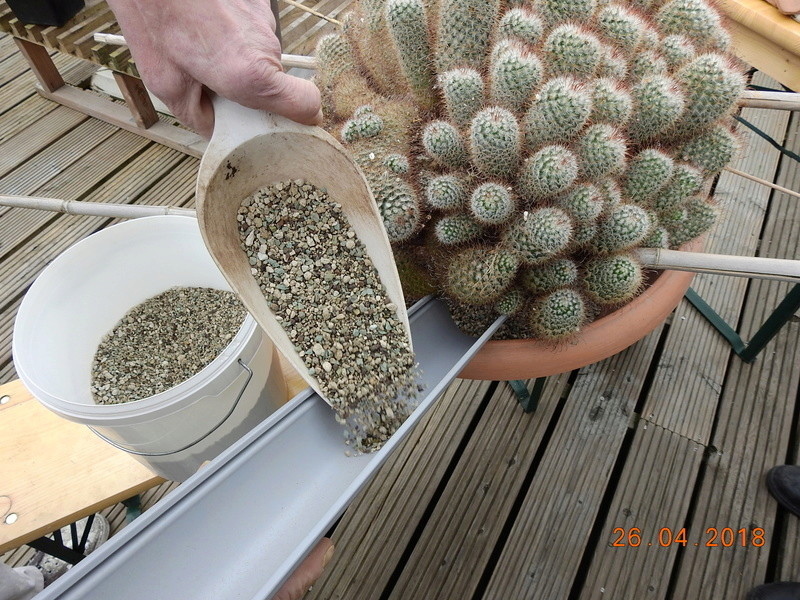 Cacti and Sukkulent in Köln, every day new flowers in the greenhouse Part 192 Bild2112