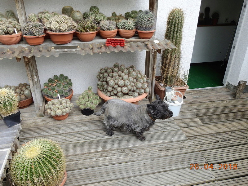 Cacti and Sukkulent in Köln, every day new flowers in the greenhouse Part 192 Bild2120